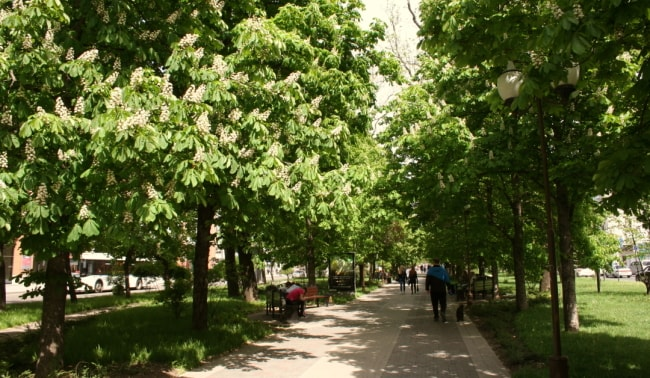 Краснодар улица Красная